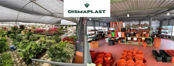 Dismaplast