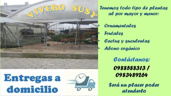 Vivero Susy