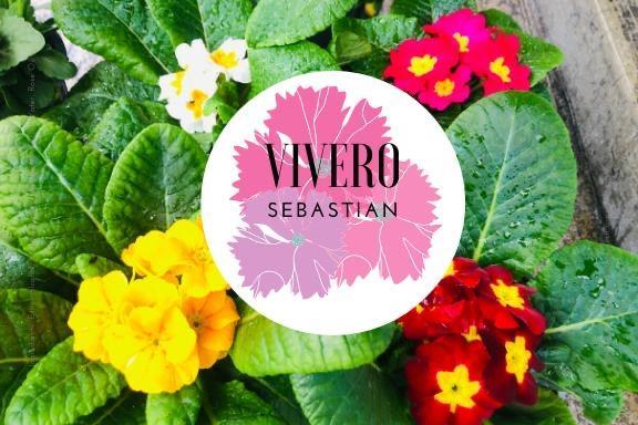 Vivero Sebastian
