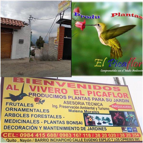 Produplantas El Picaflor