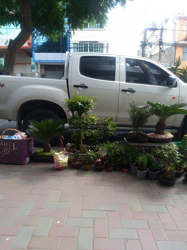 Venta de plantas y bonsai
